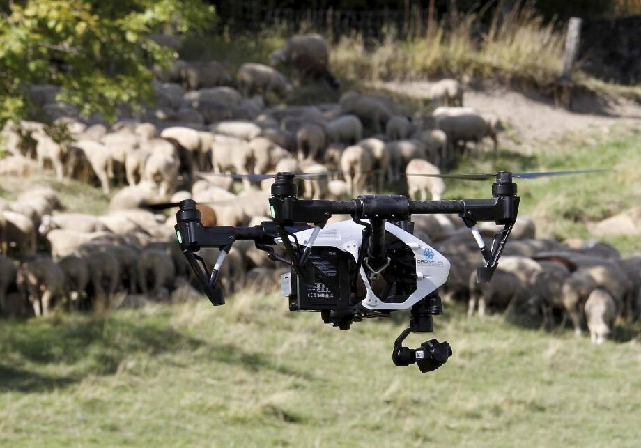 Démonstration de drone équipé de caméras thermographiques pour protéger les troupeaux et suivre les meutes de loups hier à Colmars (04).