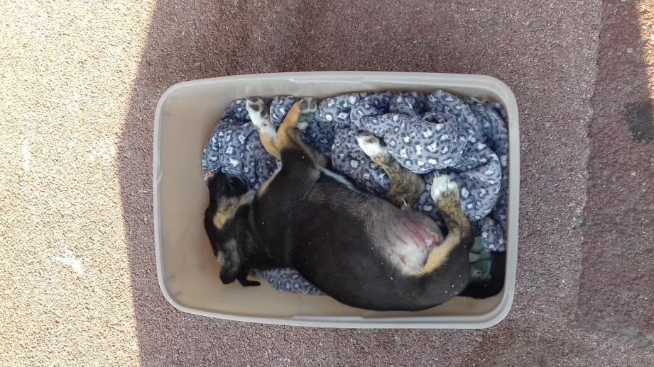 Le petit mâle trouvé samedi à 8 heures à Cagnes, allée des Bugadières.