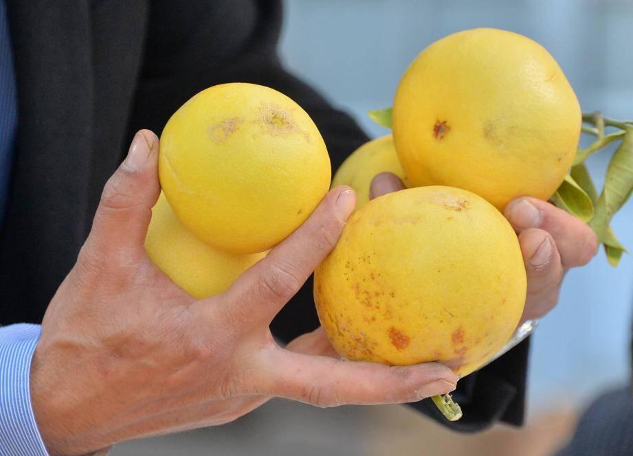 Le citron de Menton.