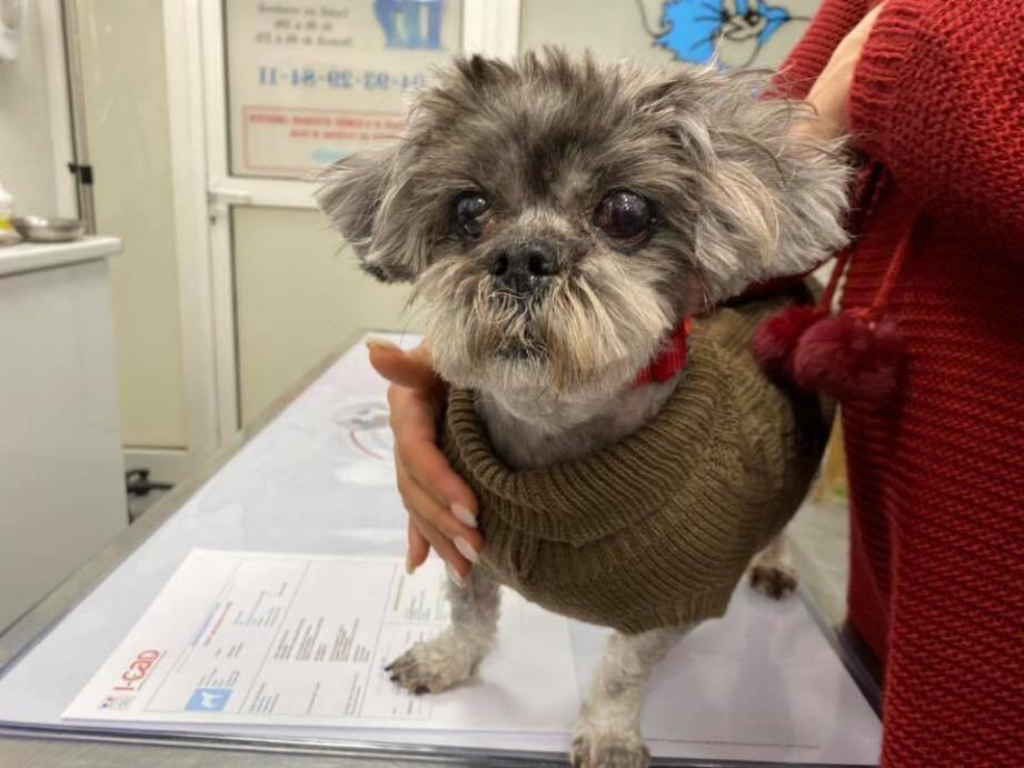Après une prise en charge chez le vétérinaire et dans un salon de toilettage, « Mamie » a pu retrouver sa petite bouille.