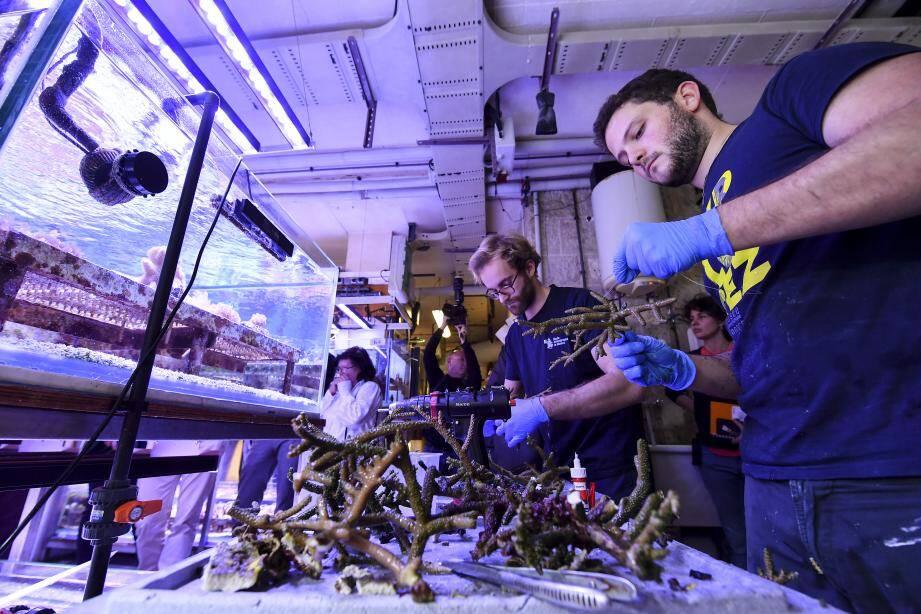 Dans les sous-sols du musée, des dizaines d'espèces de corail du monde entier sont préservées et cultivées pour les aquariums, ainsi que le travail scientifique des équipes.