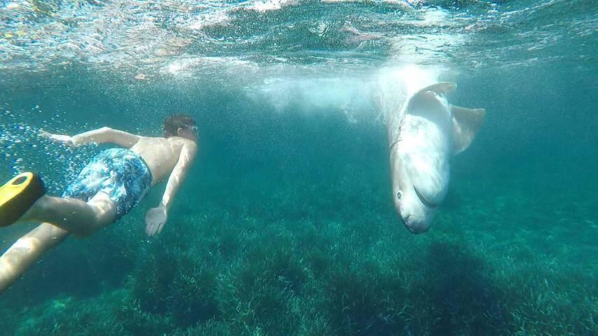 Découverte insolite pour Andrea (ici sur la photo) lors d'une plongée en bord de mer.