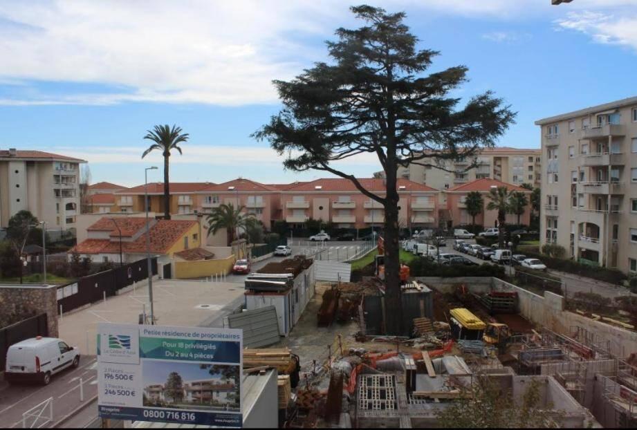 """Les immeubles ont poussé mais l'arbre est tombé, victime de """"dépérissement""""."""