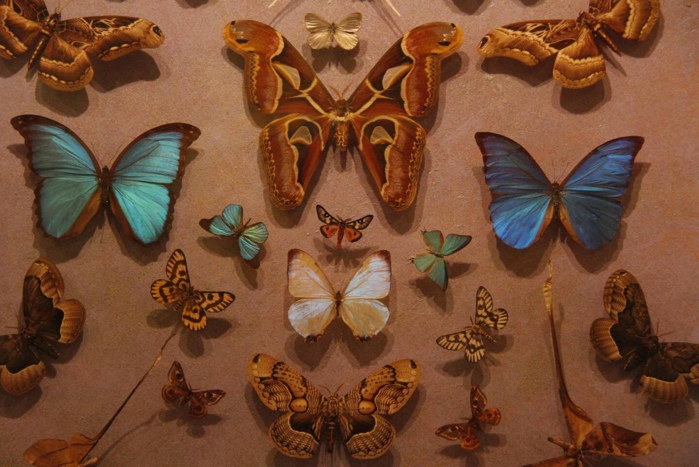 La maison des papillons, temps des lépidoptères et des insectes fantastiques.
