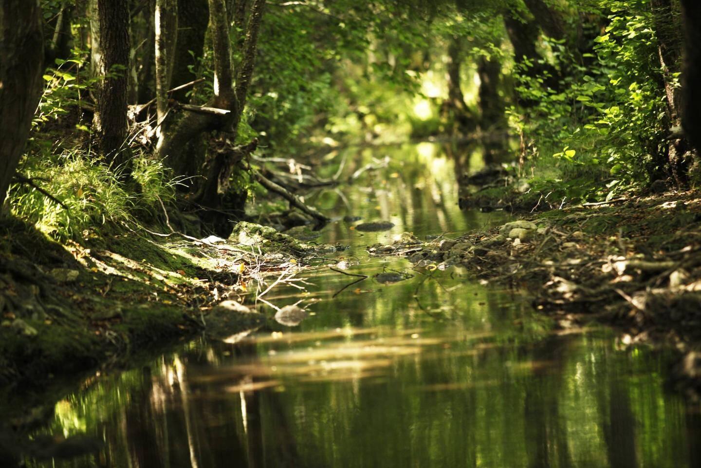 Balade autour du Lac du Rioutard : rivière de l'Endre