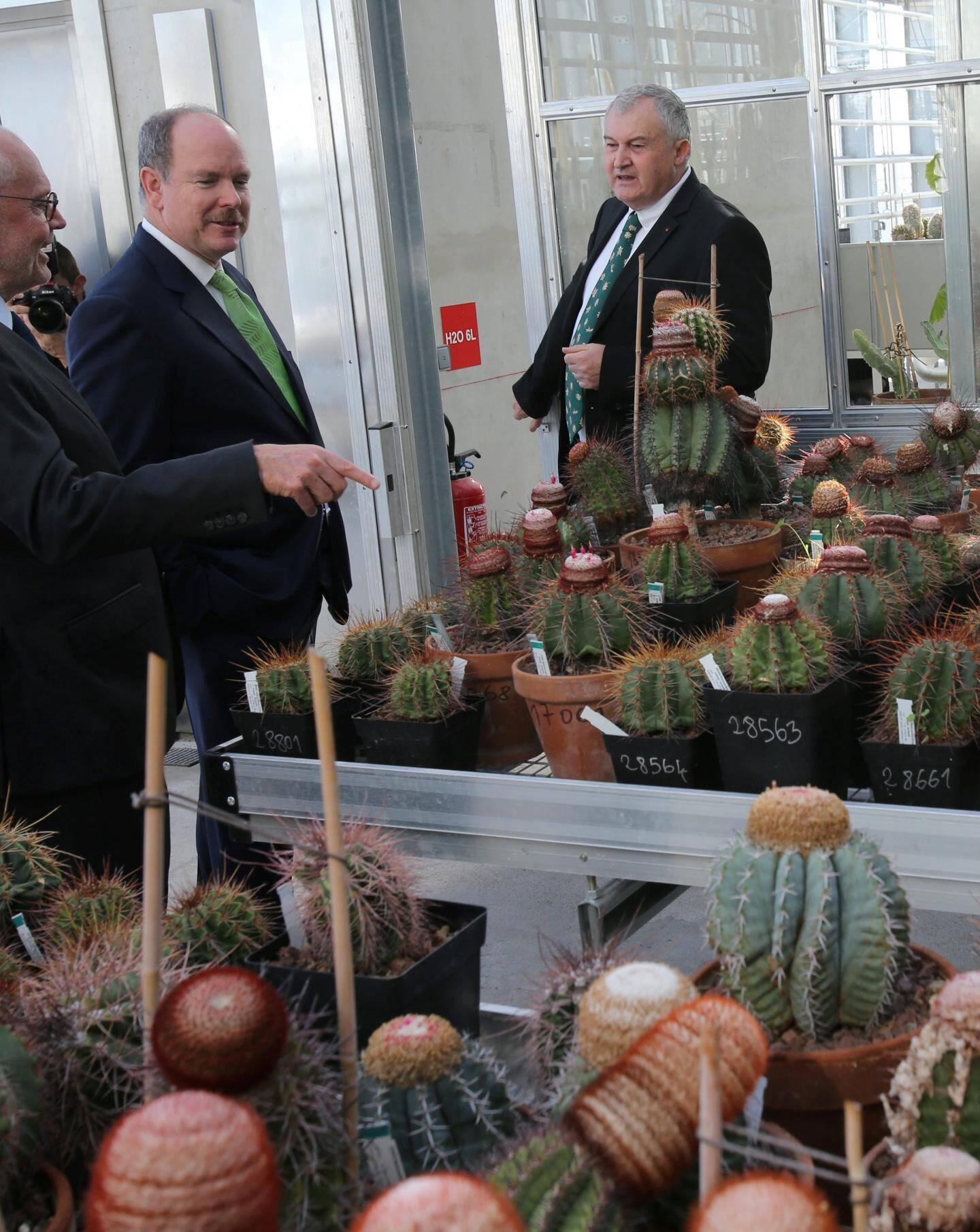 Les plantes les plus fragiles au froid ont été placées dans les serres, les autres sous abri.
