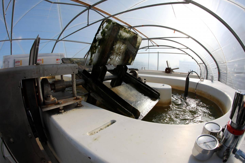 Les microalgues poussent en suspension dans l'eau, brassée par des roues à aubes.