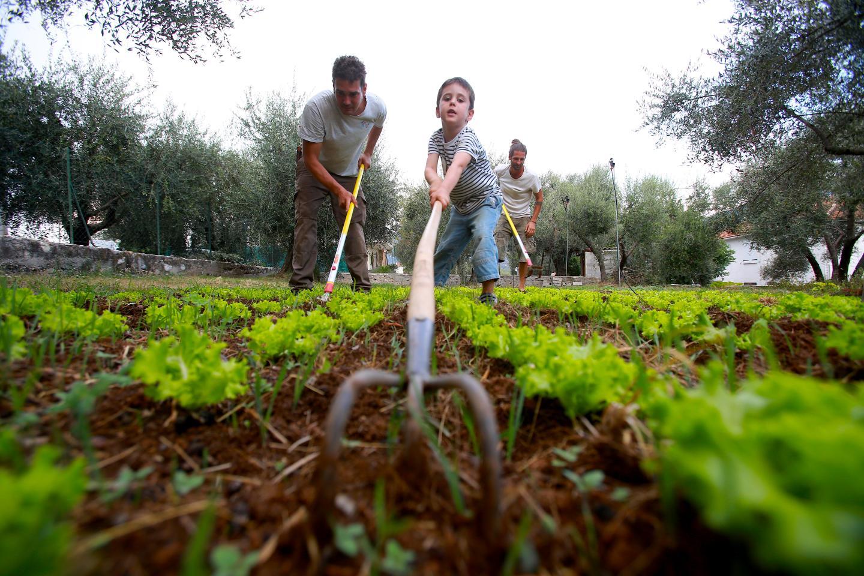 Nicolas Lassauque s'est installé aux plans de Carros. Ce néo-maraîcher cultive en bio, et en famille. Ici avec son fils Titouan.
