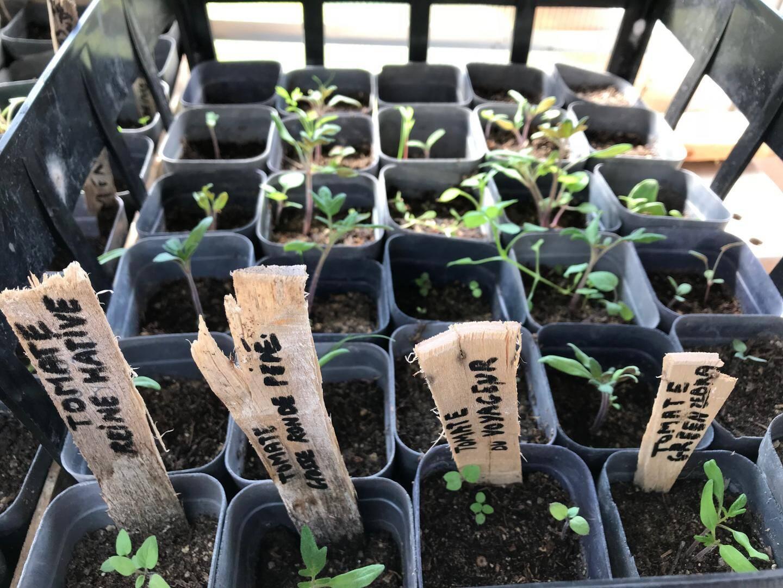 Dans une petite serre, on prépare les semis, avant de les planter dans le jardin collectif.
