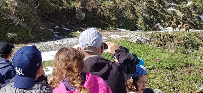 L'enseignant et ses élèves observant les bouquetins, sur le site de San Giacomo di Entracque en Italie.