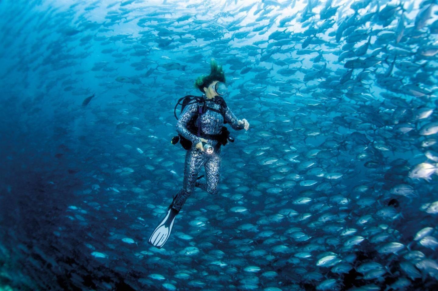Dans un tourbillon de poissons en Malaisie.