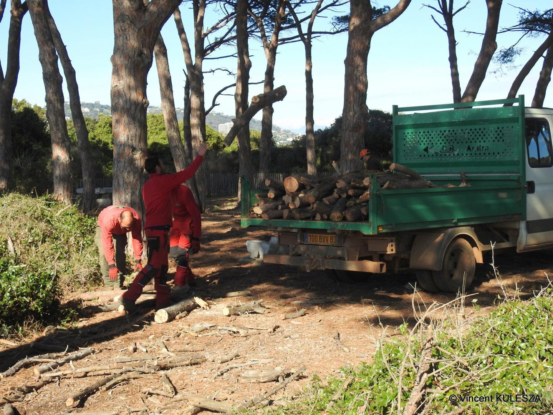 Il faut élaguer les arbres pour la santé de la forêt et la sécurité des visiteurs.