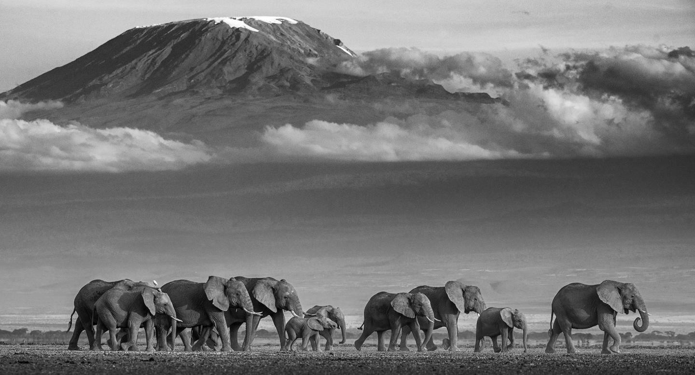 «Les éléphants ne sont pas si difficiles à photographier, du moment que vous n'envahissez pas leur territoire», confie David Yarrow.