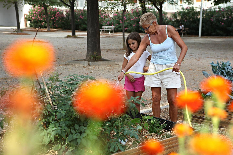 Le compost sert ensuite à nourrir le jardin partagé qui se trouve juste à côté.