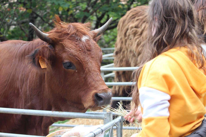 Du bétail qui fait toujours la joie des enfants...