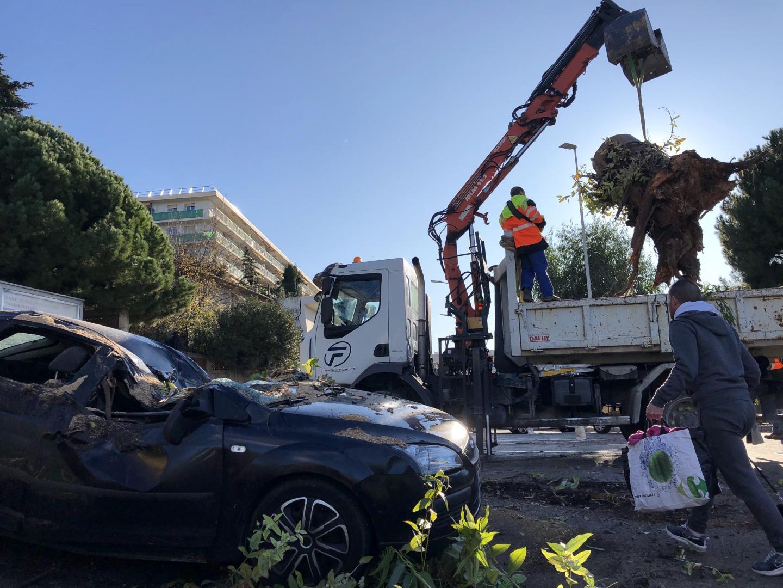 à Nice-Ouest, un arbre de 22 mètres de long a littéralement écrasé cette Ford.