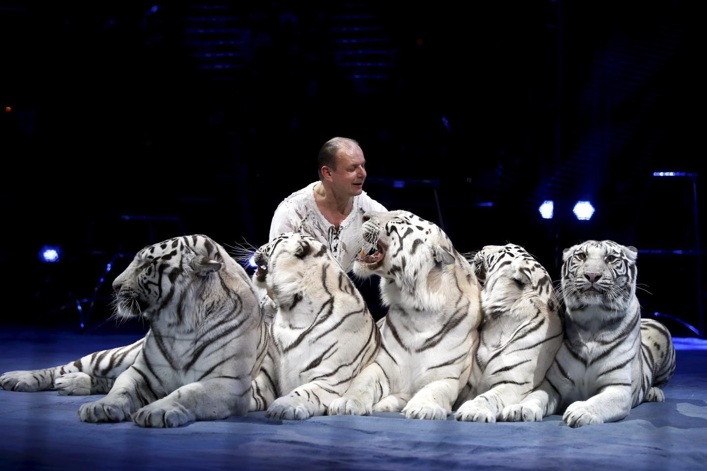 Tigres blancs et Clown d'argent pour le Russe Sergey Nesterov qui joue avec ses fauves comme de petits chats. Et la salve de bravo qui a clôturé son numéro prouve que le public du festival plébiscite toujours les numéros avec les animaux.
