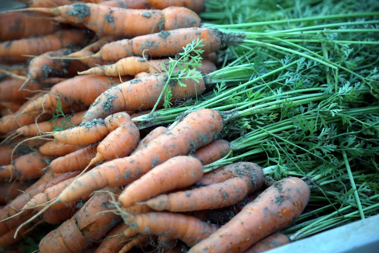 Une fois assemblées en bottes, les carottes sont mises à la vente au marché Forville de Cannes.