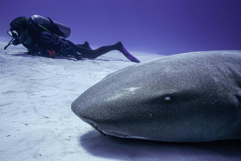 Les explorateurs au plus près d'un requin-nourrice.