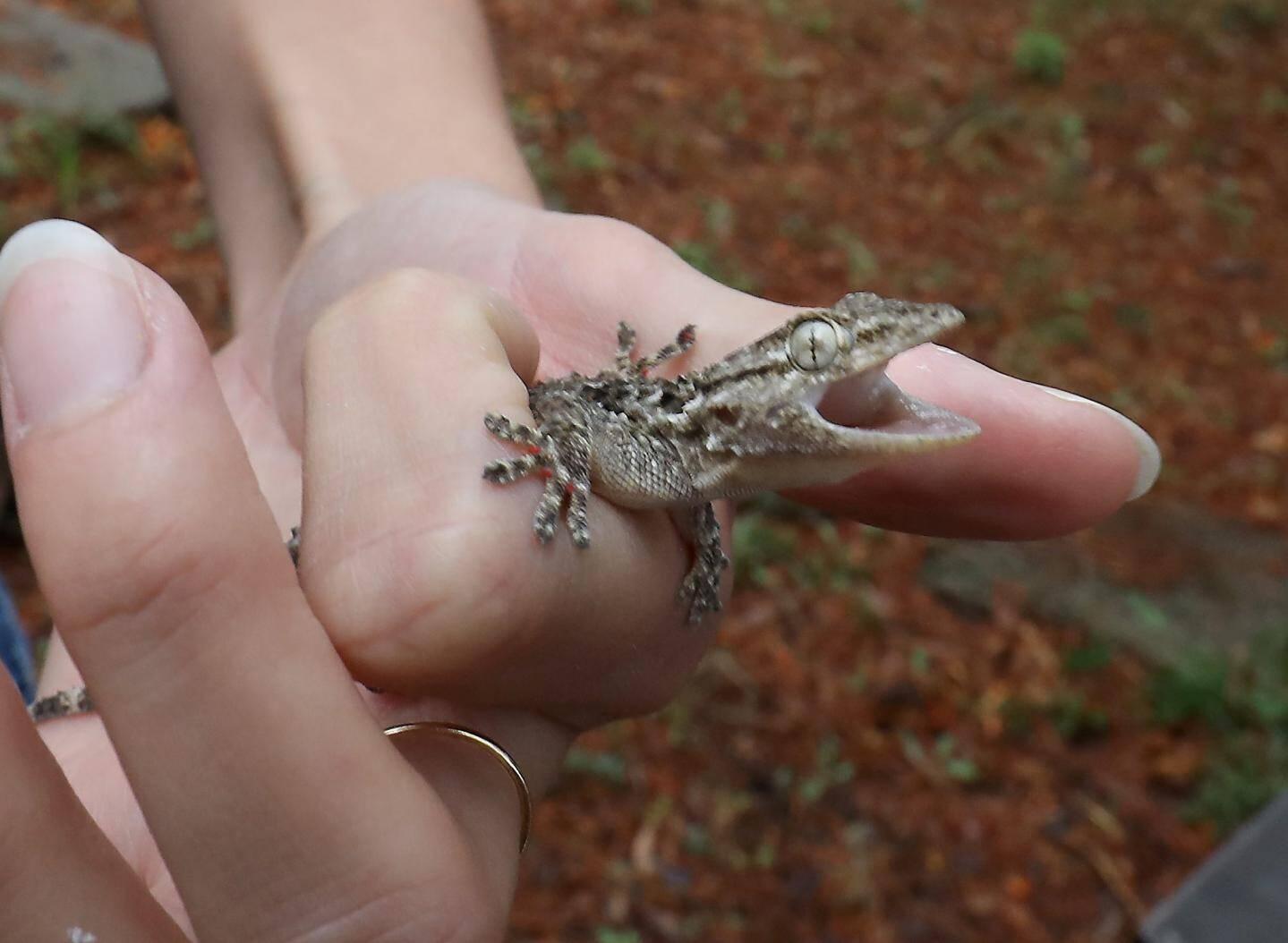 Les reptiles ont besoin de chaleur, construisez-leur un abri fait de pierres.
