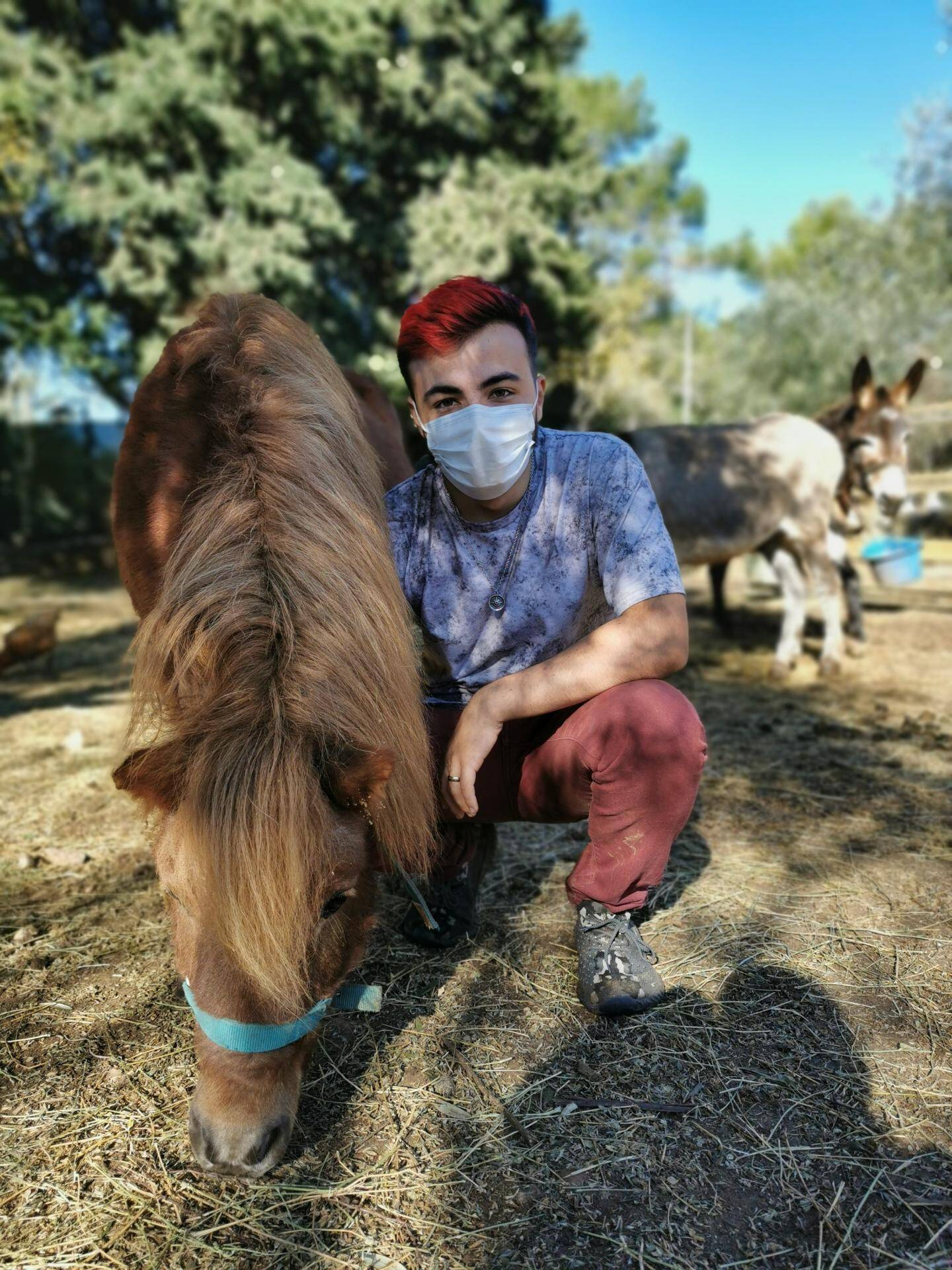 Les équidés, cheval de 30 ans, poneys, ânes, ont un enclos qu'ils partagent avec deux lamas. Téo, en service civique, vient de les nourrir.