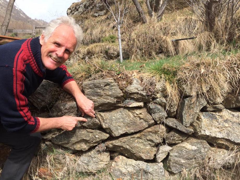 Alain Regis, cheville ouvrière de l'association, restaure les murs en pierres sèches.