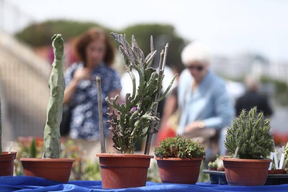 Du 12 au 21 mai, les visiteurs pourront admirer plantes, agrumes ou meubles de jardin sur l'esplanade du Pré-des-Pécheurs, pour la seconde édition des Floralies.