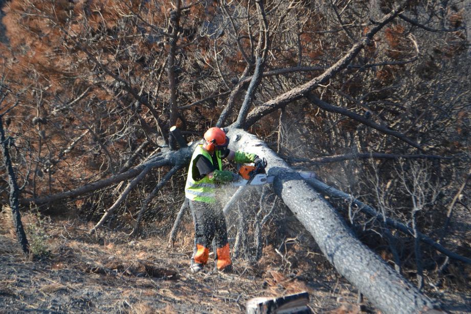 Les arbres morts sont abattus et débités, pour la création des fascines (à d.) afin de stabiliser le sol.