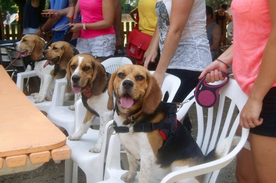 De très nombreux propriétaires de Beagles avaient fait le déplacement.