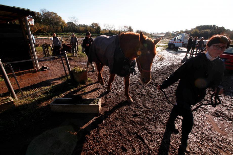 Les amis, les propriétaires de centres équestres sont venus aider Delphine et mettre les chevaux à l'abri.