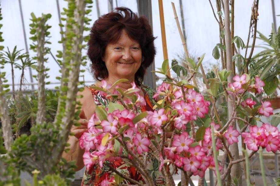 Thérèse Homassel cultive ses «bébés» de la graine jusqu'à la plante. Parmi ses préférées, les echeverias, «pour leur grande variété et leurs nuances de couleurs.Il n'y en a pas une pareille à l'autre».