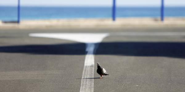 Un pigeon, à Menton, pendant le confinement.