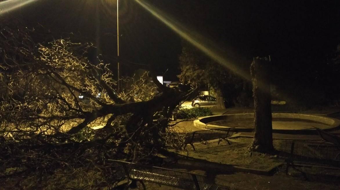 Un arbre coupé en deux à Grasse