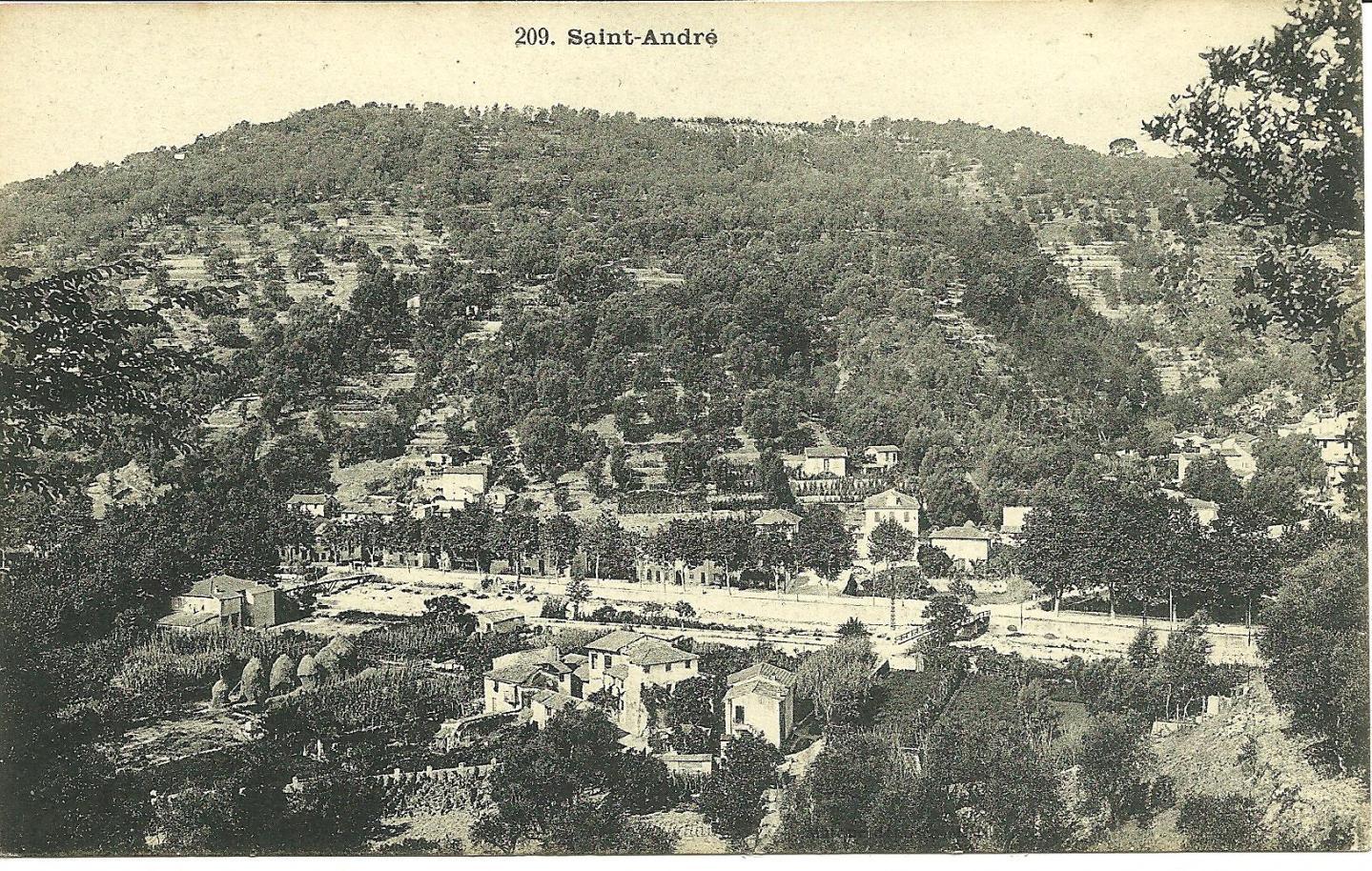 L'oliveraie de l'Abadie vue depuis Saint André de la Roche.
