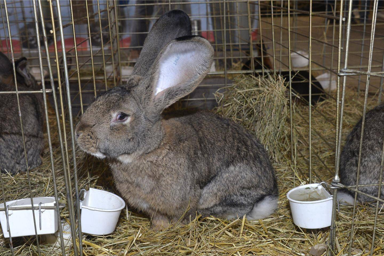 Les animaux de basse-cours investiront la Condamine ce samedi.
