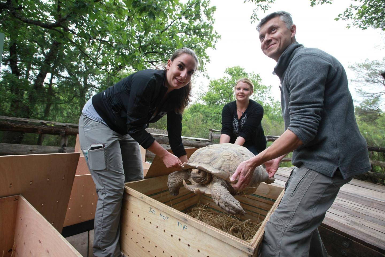 gonfaronretour des tortues au senegal