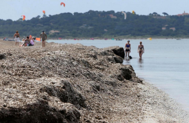 La présence de posidonies assure la survie des plages du littoral.