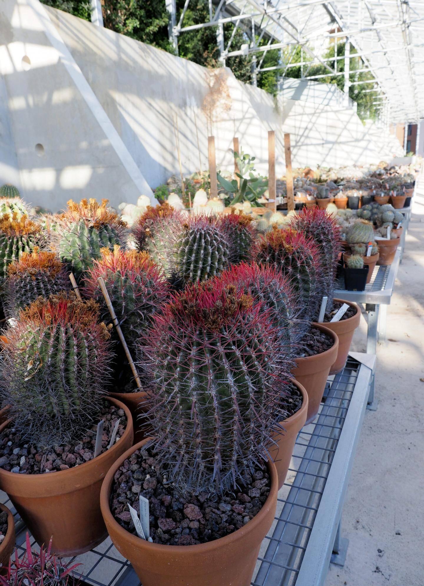 Plus de 10 000 plantes sont conservées ici.
