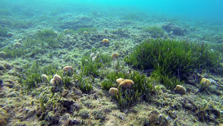 Un comptage larvaire effectué entre 1996 et 2003 concluait une érosion de 30% de la biodiversité des mollusques et crustacés.