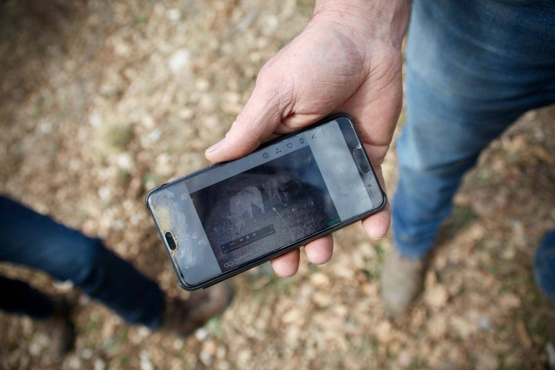 Grâce à un piège photo, Alain Benoît a pu voir le loup le narguer à plusieurs reprises...