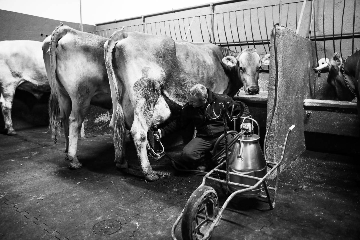 A Roc Agel, les garçons de ferme effectuent notamment la traite des vaches.