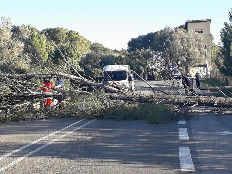 Avenue de La borde, à Mougins, un arbre a été déraciné.