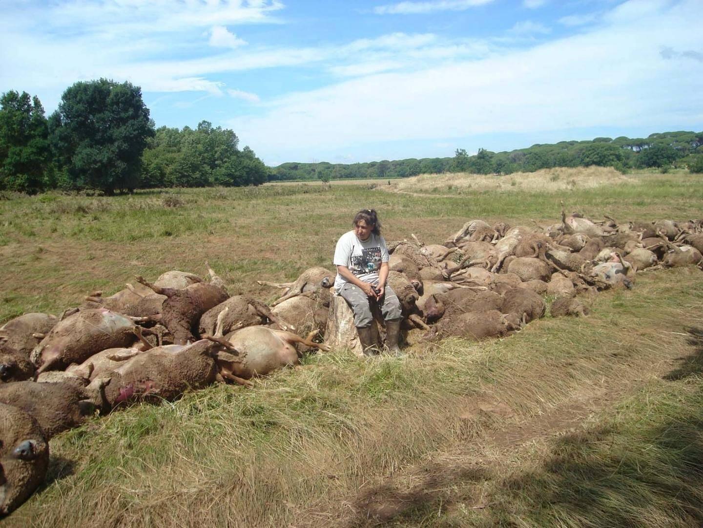 Entre Le Cannet et Vidauban, le troupeau d'Édith et Eric Féménia a été pris au piège de la montée des eaux. Plus de mille bêtes sont mortes.