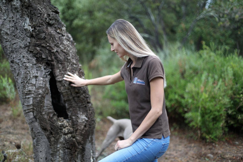 N'enlevez pas le bois mort! Il est très utile, surtout s'il contient une cavité...