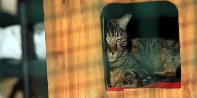 Peut-on se rendre dans un refuge pour adopter un animal?
