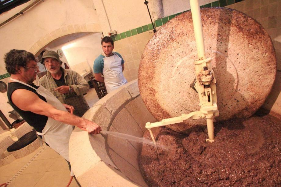 Huile : la saison des olives a déjà démarré ! - 14815971.jpg