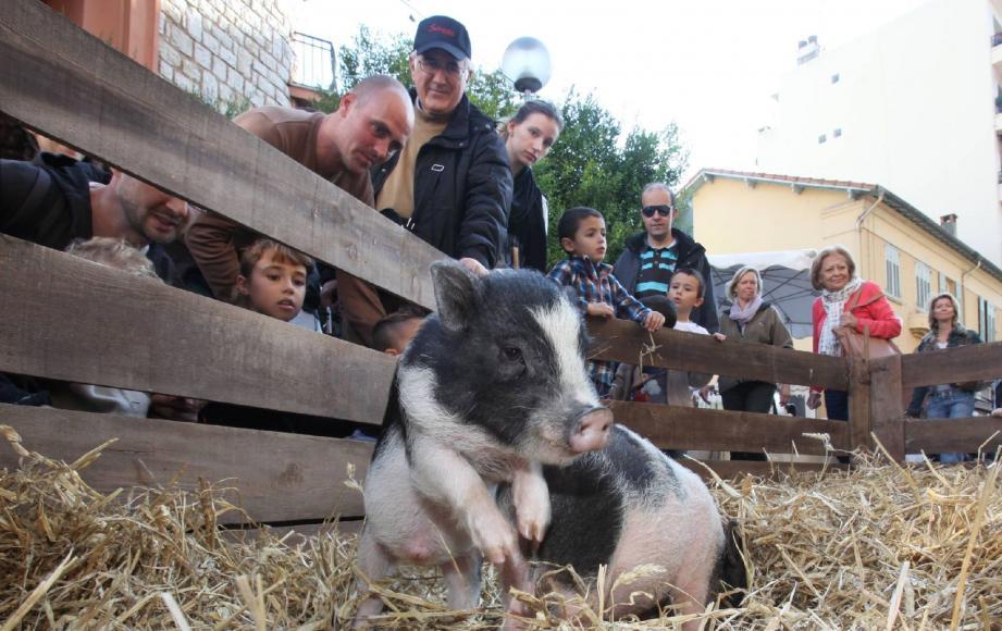 Affluence record hier à Cagnes pour la fête de la châtaigne. Les visiteurs sont venus pour déguster des châtaignes grillées, mais aussi pour voir les animaux et le concours de bûcheronnage.