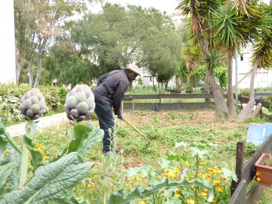 Aux Maurels, une dizaine de locataires font pousser fruits, légumes et fleurs dans les jardins partagés.