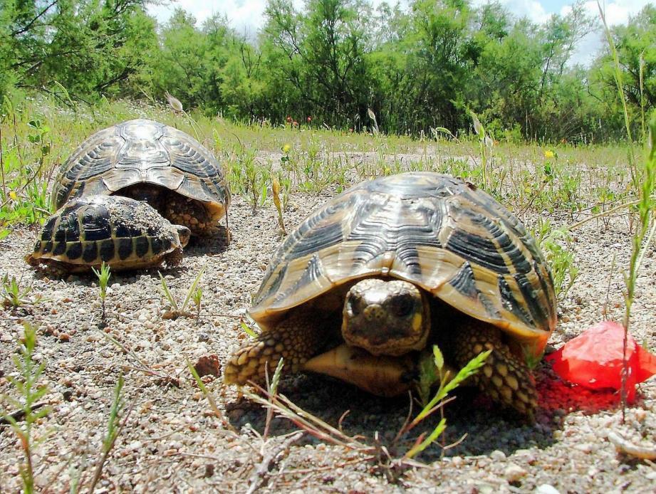 La commune de Gonfaron, initialement choisie pour recevoir le lycée, n'est pas parvenue à offrir un terrain suffisamment vaste et exempt de tortues.