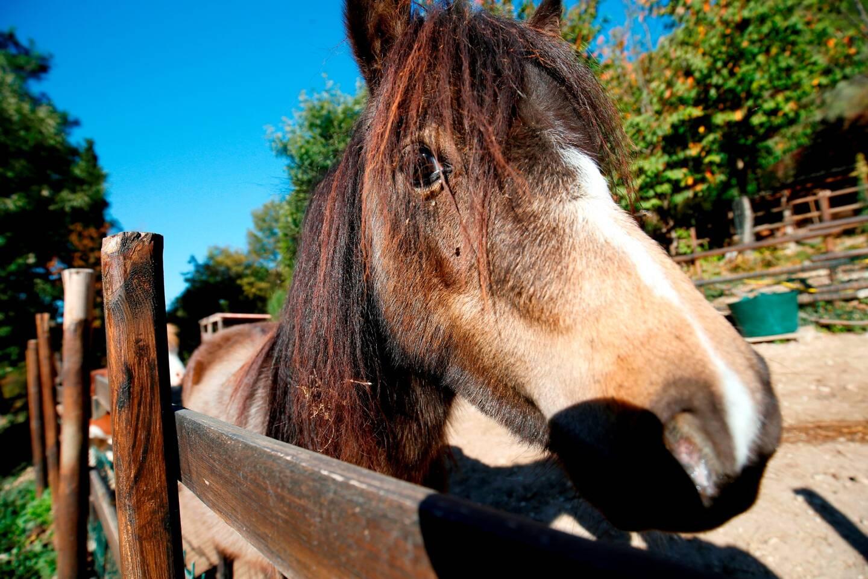 Photo d'illustration d'un cheval.